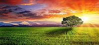 Картина панорамная ДЕРЕВО НА ЗАКАТЕ