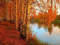 Набор для творчества Алмазная картина Золотая осень