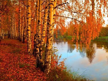 Набор для творчества Алмазная картина Золотая осень, фото 2