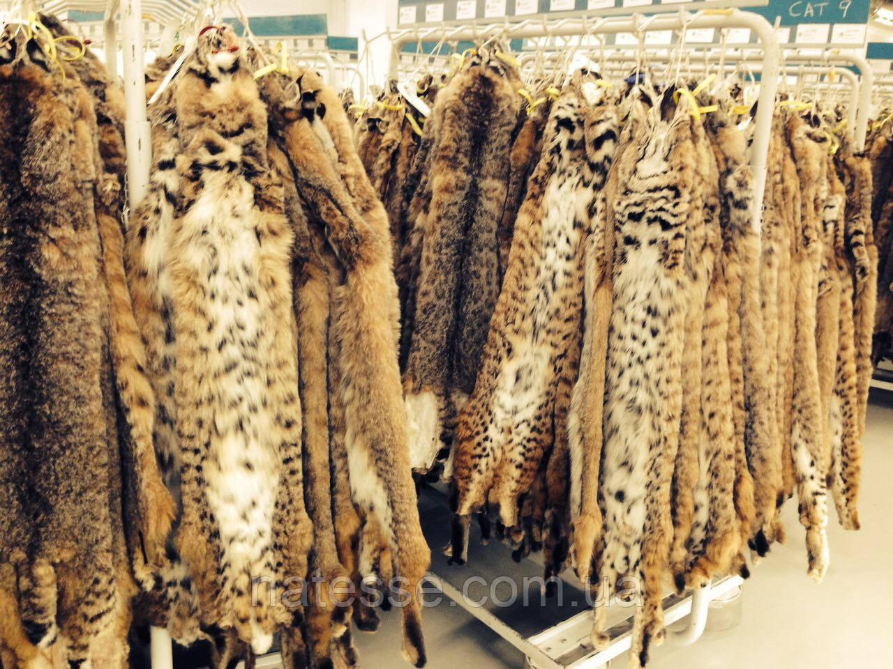 Шкуры мех рысевидного кота рыси длина 95-100 см
