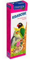 Природа колосок «Медовый» для средних попугаев