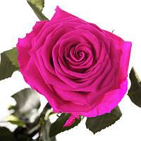Неувядающая долгосвежая живая роза FLORICH-  МАЛИНОВЫЙ РОДОЛИТ 7 карат