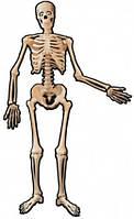 Декорация Скелет 1,4м