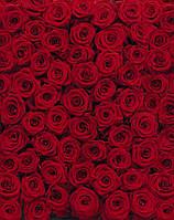 Фотообои KOMAR 4-077 Roses