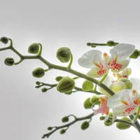 Фотообои KOMAR 1-608 Orchidee, фото 1