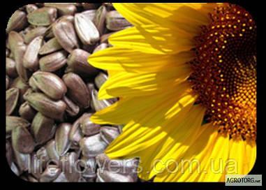Насіння гібриду соняшнику Український F 1
