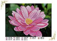 Вышивка бисером Розовый цветок схема