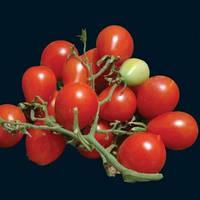 Помидор черри Riesentraube 20 cемян