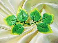 Лист розы кайма белая