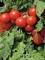 Помидор черри крупный красный 15 cемян
