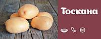 Картофель семенной Тоскана
