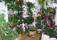 Влияния растений на жизнь человека