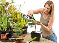 Уход за домашними растениями от Clean House