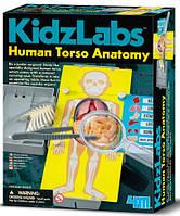 Анатомия торса человека, научный набор, 4M 00-03373 (00-03373)