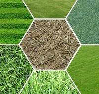 Газон трава (семена) от 1 кг - Германия