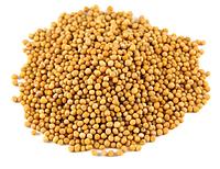 Гірчиця жовта (1 кг)