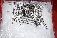 Паутина, фото 1