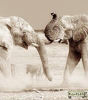 Фреска Picto-Flex. Животные