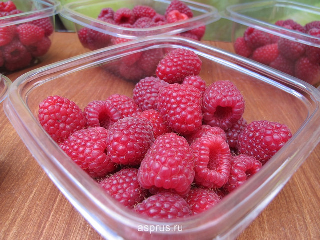Оценка ягодного рынка и спроса на ягоду малины в 2016 году от Клиома Сервис