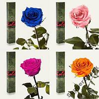 Крупная роза (36 см.)в стеклянной колбе не вянет до 5 лет. 7 карат.