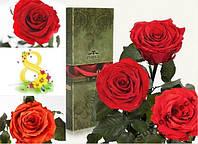 Живая роза в колбе Florich.Не вянет 5 лет! 3 розы.КРУПНЫЕ.5/36см