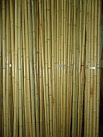 Бамбуковый ствол-К, д.1-2см, L 4м, декоративный