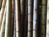 Бамбуковый ствол 4-5 см. Длина 3м
