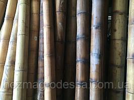 Бамбуковый ствол 4-5 см. Длина 3м Уценка!