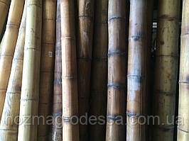 Бамбуковый ствол 5-6 см. Длина 3м.