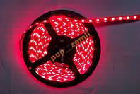 Светодиодная лента Красный SMD5050 60д/м влагозащищенная IP65 1м