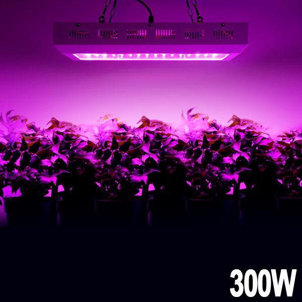 Фитопанель для растений 300W (100LEDx3W) - LED-Expert: компьютерная и бытовая техника (телевизоры, ноутбуки, планшеты), фитолампы для растений в Киеве