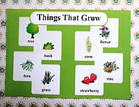 Plants. Плакат для кабинета английского языка.