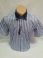 Мужские рубашки натуральный хлопок ОГ102