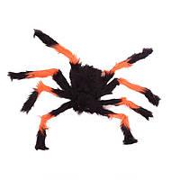 Мохнатый паук на Хэллоуин