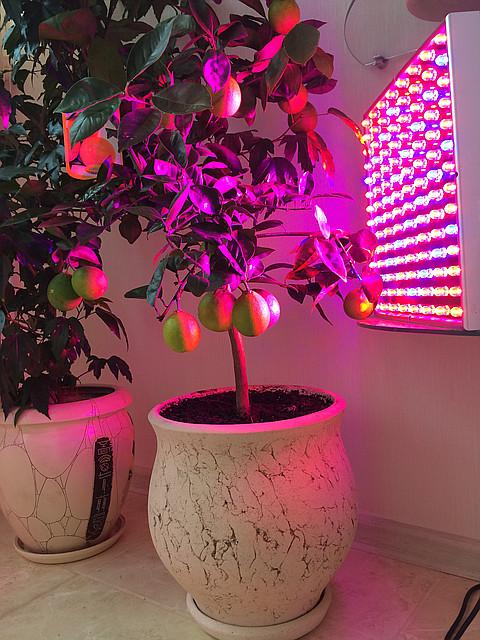 Фитопанель для растений 45W 112LED