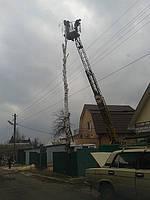 Спил деревьев Киев (067) 4093070. Удаление пней. Уборка, вывоз веток, пней, листьев., фото 1