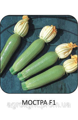 Купить Семена цуккини Мостра, Кабачок Мостра 500 шт