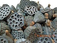 Коробочка лотоса мини