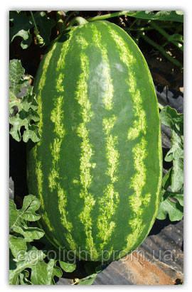 Купить Семена арбуза Нельсон 1.000 шт. цена