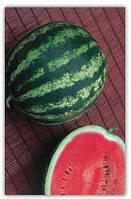 Купить семена арбуза СТЕТСОН 1.000 шт. цена