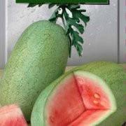 Купить Семена арбуза Чарльстон Грей 500 г. цена