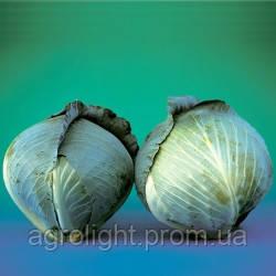 Купить Семена Капуста семена Парадокс поздняя, 2.500 шт. цена