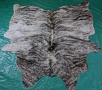 Небольшая коровья напольная шкура экзотического окраса