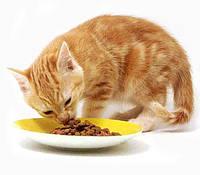 Как выбрать корм для кошки - полезные советы