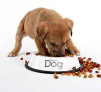 Какой корм лучше для собак - выбираем вместе