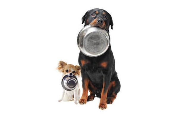 Какой сухой корм купить собаке