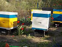 Улей из пенополиуретана ППУ ТМ Nastusya на 12 магазинных рамок. , фото 1