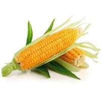 Что нужно знать о выращивании кукурузы