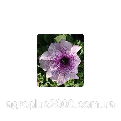 Семена Петуния грандифлора Виртуоз F1 Блекберри Blackberry 500 драже Kitano Seeds
