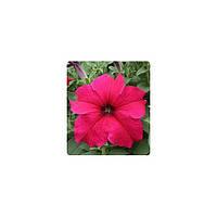 Семена Петуния грандифлора Виртуоз F1 Ярко-розовая Deep Rose 500 драже Kitano Seeds